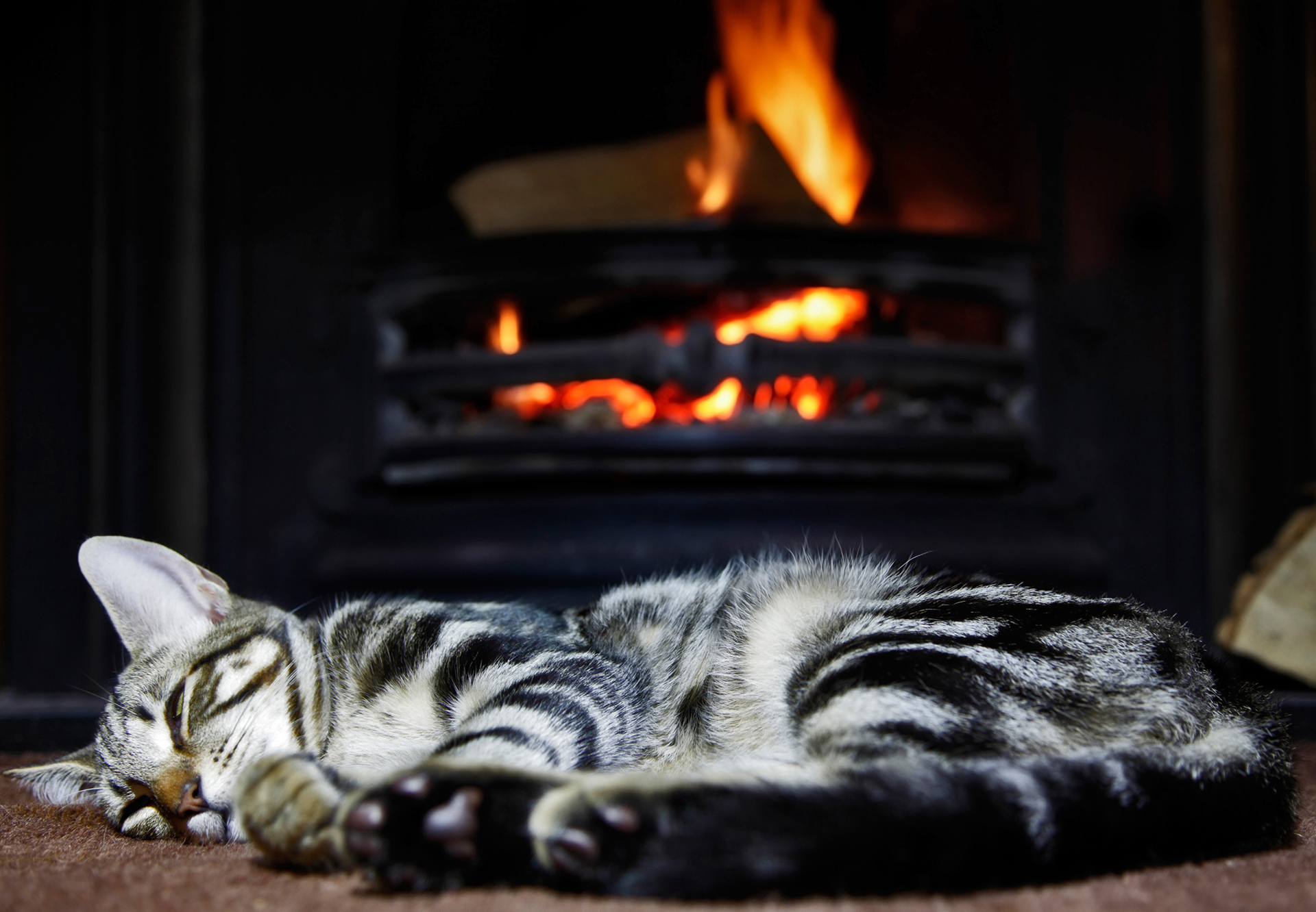 Image result for cats near fireplace