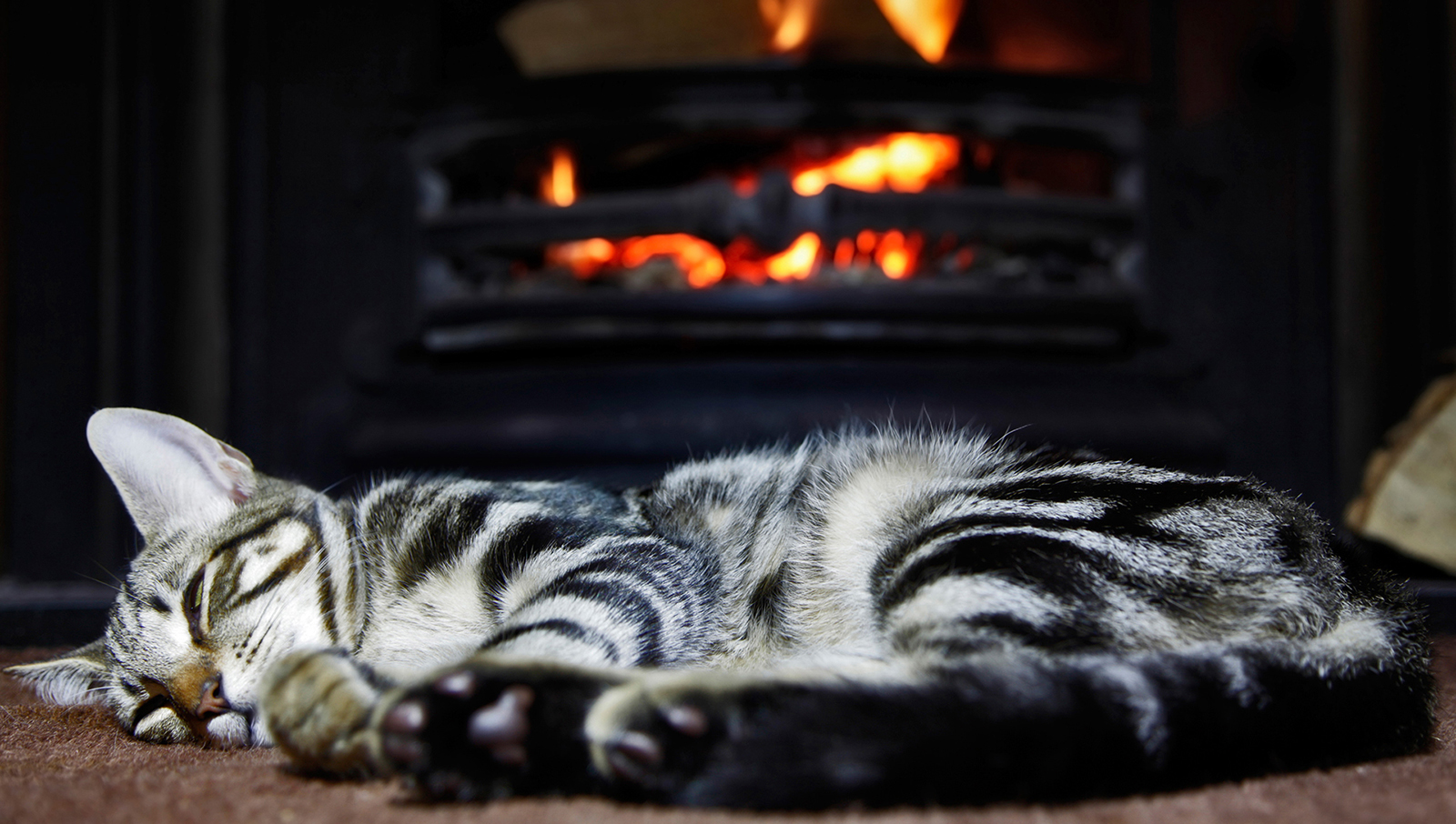 cat-sleeping-fireplace-01 - Cats in the City